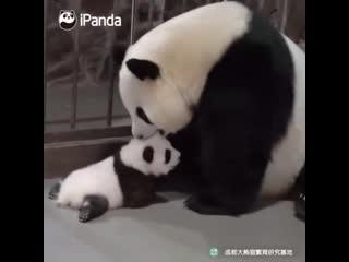 Мама-панда