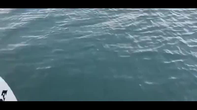 Аляска. Выдра, спасаясь от косатки, забирается на лодку...