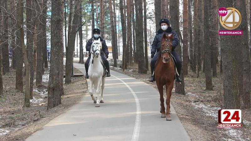 Тропу здоровья патрулирует конная полиция