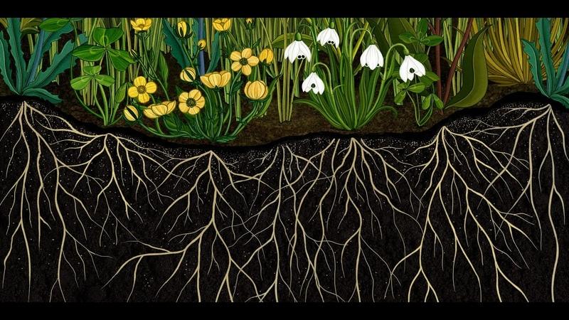 AMKK presents Botanical animation Story of Flowers full ver