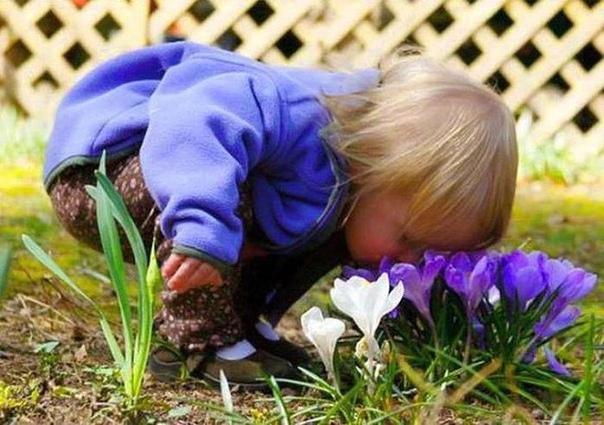 """Мама сказала: """"Цветы рвать нельзя. Можно только нюхать"""".))"""