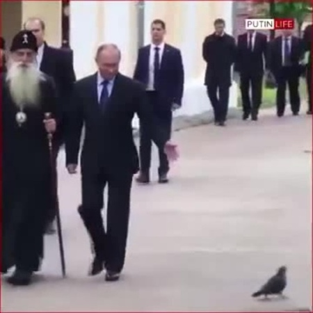 Голубь отдал честь Путину · coub коуб