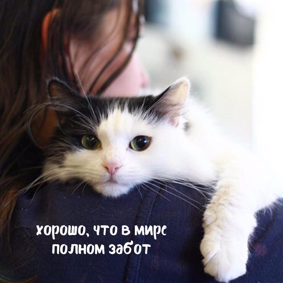 Мир прекрасен, потому что в нём есть котики :3