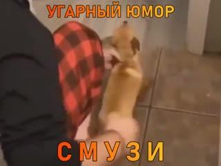 СМУЗИ - УГАРНЫЙ ЮМОР!!!