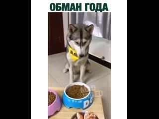 После этого взгляда он был готов съесть хозяина