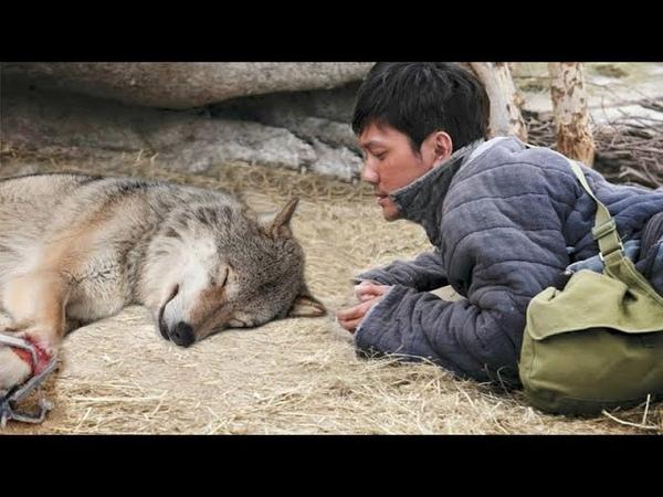 Этот парень спас волчицу а спустя один год она спасла ему жизнь…