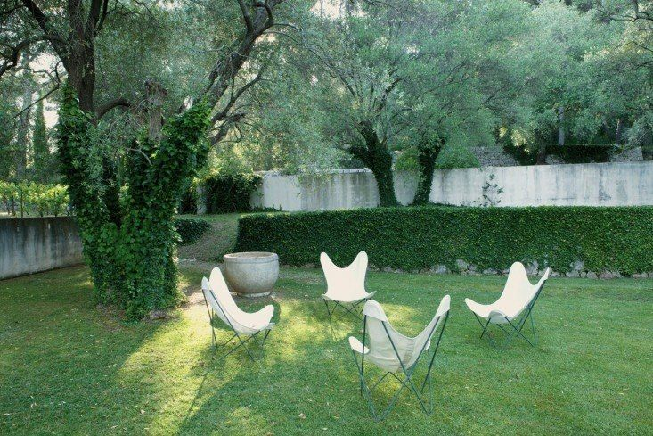 Genius Gardens with an Olive Tree by Michelle Slatalla
