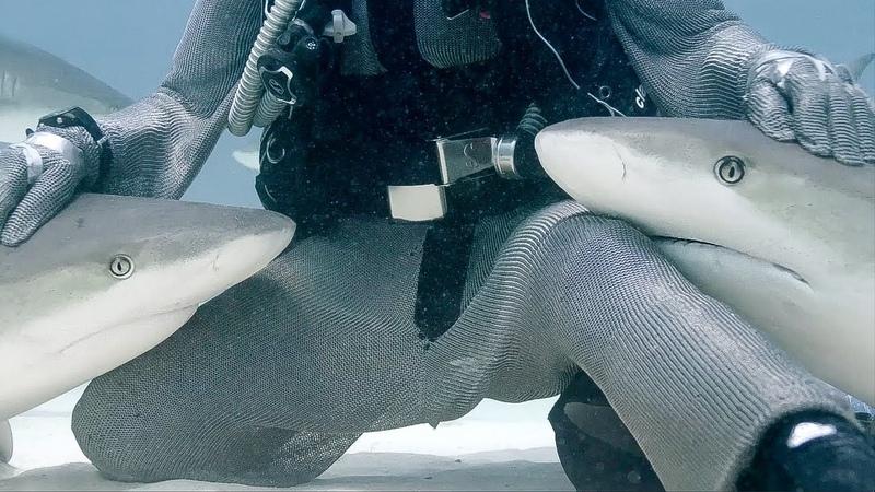 Petting Sharks like Dogs Blue Planet Live BBC Earth