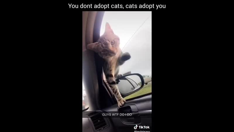 Не ты становишься хозяином кота, а он твоим