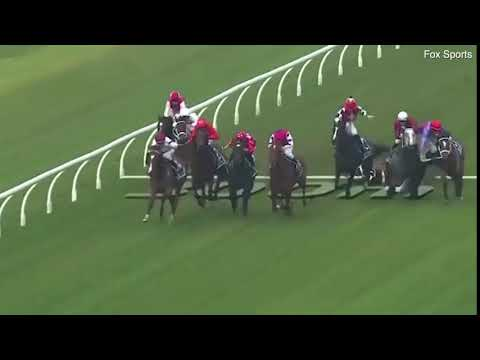 Tragedy as horse Hot 'N' Hazy is trampled during race at Rosehill