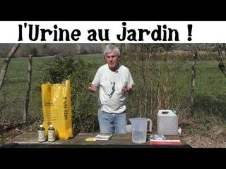 L'urine de l'or liquide au jardin !