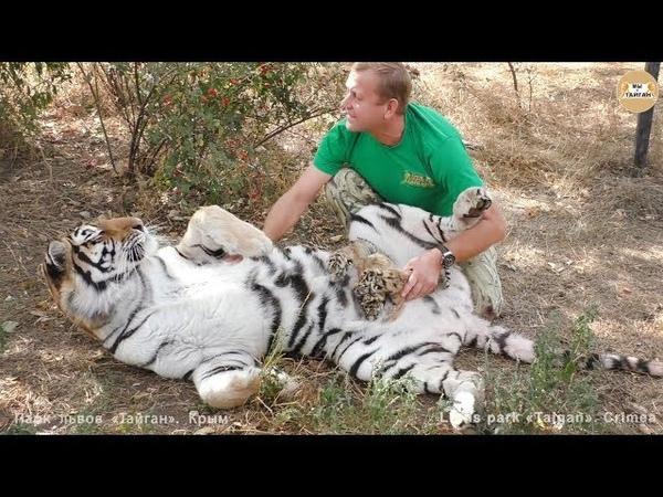 Мы с тобой одной крови - человек и тигр. Тайган. Tigress believe her human. Taigan