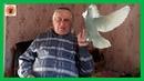 Голуби Геннадий МациновМартовские зарисовки Николаевские голуби станицы Кагальницкой!