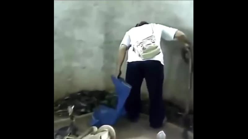 When you are pissed at work and you care about nothing flushed flushed flushed flushed flushed snake Вижте прево HD