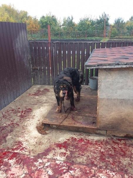 В Тамбовской области садист попытался убить щенка, пока его хозяев не было дома. На Первомайской улице города Уварово неизвестный покалечил молодую собаку. Сначала ему чем-то забрызгали глаза, а