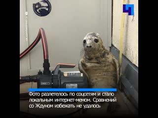 Неудачный побег тюленя стал интернет-мемом