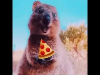 Когда привезли пиццу и ты сидишь весь такой довольный ешь