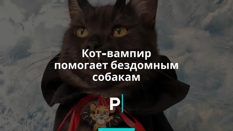 Кот вампир помогает бездомным собакам