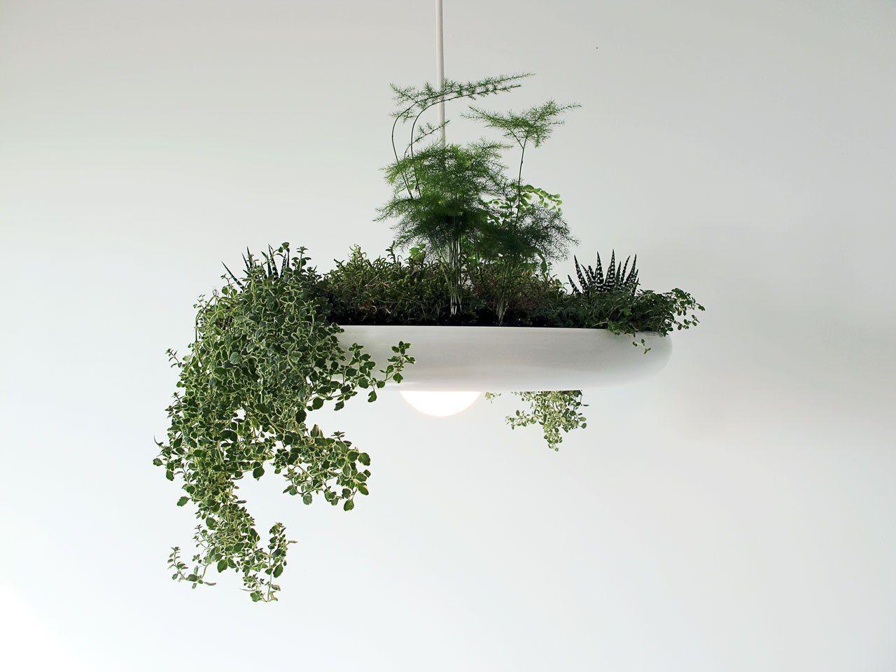 The Babylon Plantable Light Fixture by Ryan Taylors