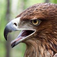 Логотип Приют для птиц