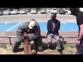 Вот это собака!