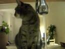 Бешеные коты - 2