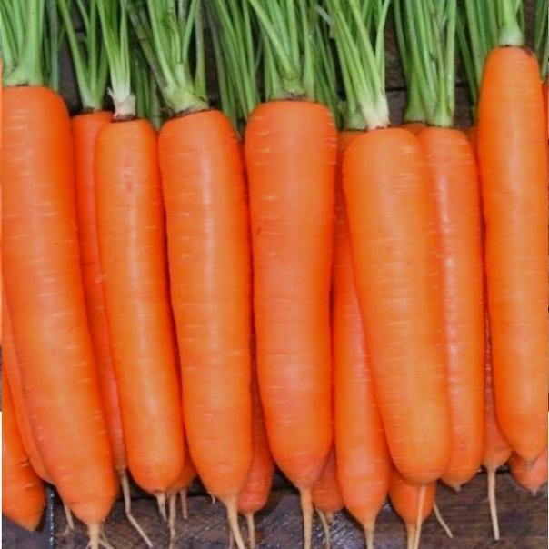 Чистая и урожайная морковка!