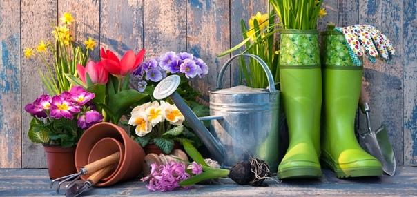 Работа весной на дачном участке . 1. Раскрываем растения. Первым делом после обхода всех посадок и грядок нужно раскрыть растения, которые были закрыты подручным материалом. Многие растения