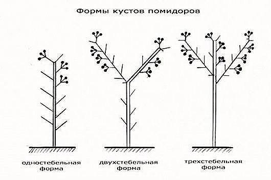 ЛИСТВА У ТОМАТОВ - УДАЛЯТЬ ИЛИ НЕТ ВСЕ О ПАСЫНКОВАНИИ ОВОЩЕЙ. Листья, как и стебель, плоды и корень есть части целого растения. И количество листьев регулирует само растение для более