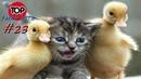 ПРИКОЛЫ 2019, ТОП СМЕШНЫХ ВИДЕО С ЖИВОТНЫМИ/Смешные животные/Смешные кошки/TOP FUNNY PETS 23