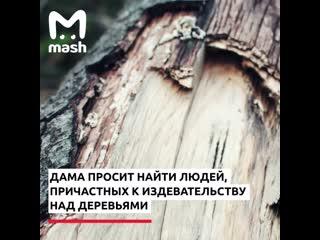 В Новой Москве полиция разбирает дело века: у 1500 деревьев сняли кору