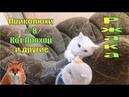 Смешные коты 8 Смешное видео Свежие приколы про животных 2019