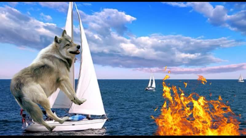 Под шум Горящий Воды, Волк кинулся на Парус