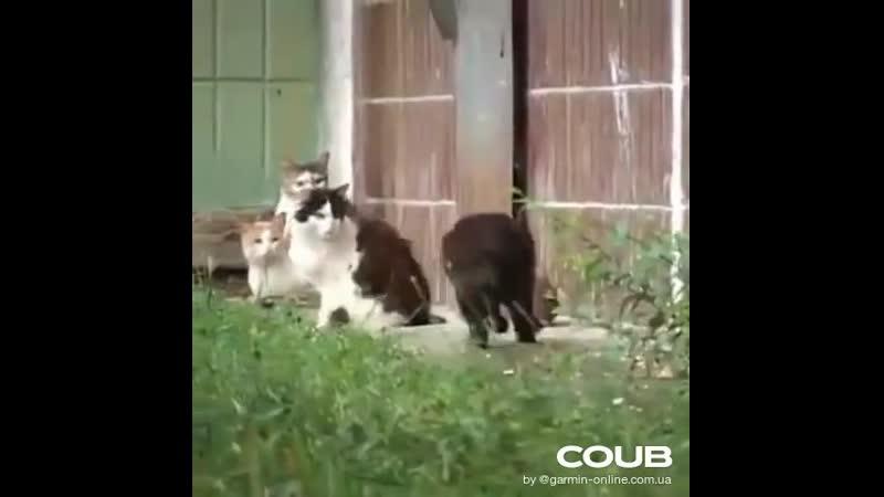 Не те нынче кошки крыса боец