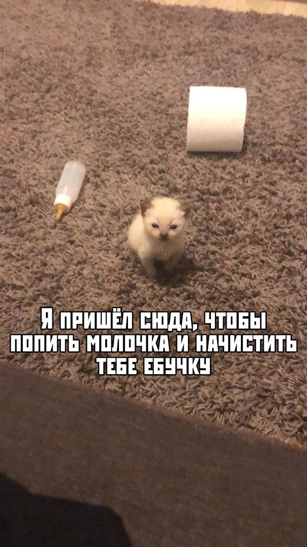 МемАлирр - Страница 2 JxUyPjmpvyI