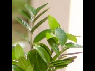 12 хитростей для выращивания комнатных растений