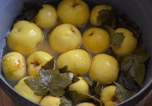 Моченые яблоки! Самые лучшие рецепты! Существует три вида мочения сахарное, кислое и простое.Очень важно подготовить для вымачивания подходящие яблоки. Наиболее подходящими для мочения являются