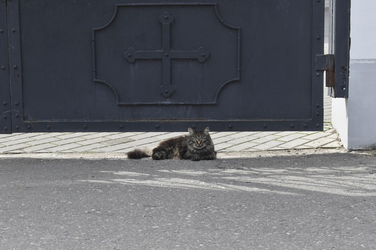 Уличный кот в ИвановЕ