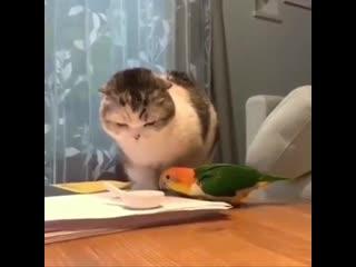 Кто против Попугая...