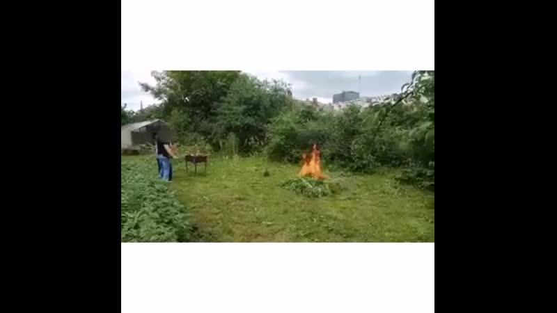 В Великих Луках полицией уничтожена плантация конопли