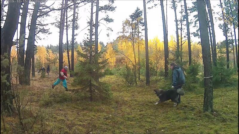 Ишмитсун, 10 мес. ( ДР Дивный х МР Хвала ГД) Красная Горка, Белов А
