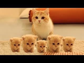 Смешные коты | Подборка за неделю #13 | Котопятница