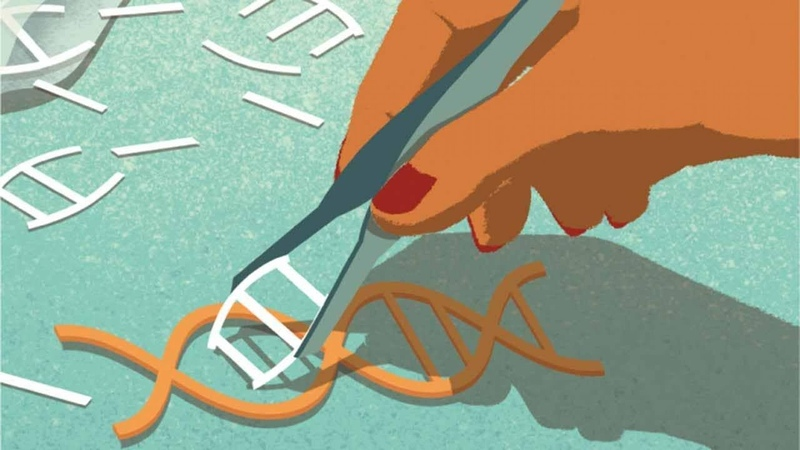 У человека может быть иммунитет к CRISPR Cas9 Plushkin