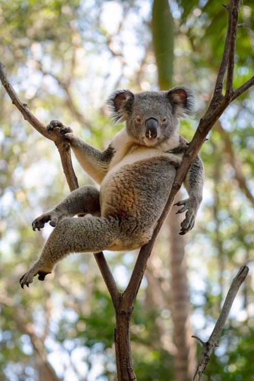 Мачо на деревьях