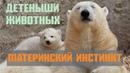 Детеныши животных: Материнский инстинкт. Домашние животные и их детеныши