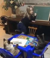 id_33886 Это я объясняю котам, почему не могу кормить их 10 раз в день 😁  #gif@bon