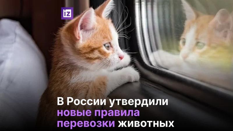 Новые нормы провоза животных в поездах