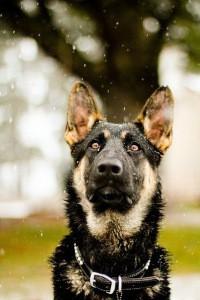 Собаки всех пород. Город Пермь ♡ | ВКонтакте
