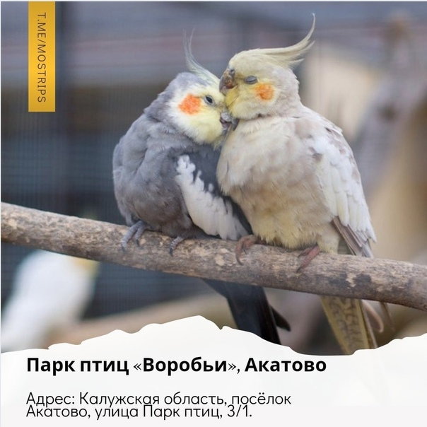 ТОп-10 идей для отдыха на выходные для москвичей:...
