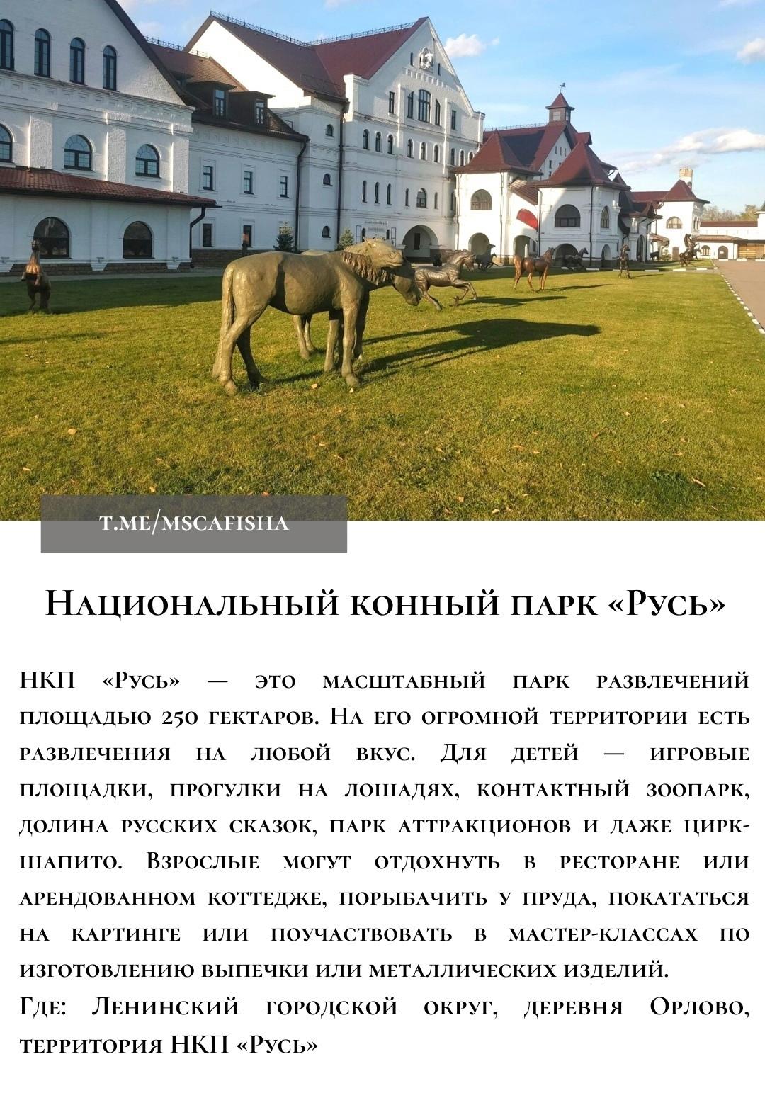 ТОП-5 мест, где можно покататься на лошадях в Подмосковье:
